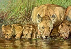 Lions Drinking by Tony Forrest -  sized 23x17 inches. Available from Whitewall Galleries
